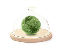Protecting the green globe. Green plant globe under bell glass on wooden base over white background Stock Photography
