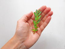Protecting Hand. Human Holding a Sprout on Hand. Nature Protection Concept Stock Photos