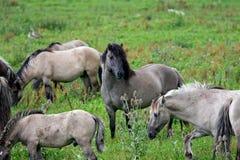 Protecting the herd Stock Photo