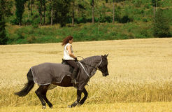 Protecting horses from insects. The horse is protected from insects with blanket-net Royalty Free Stock Images