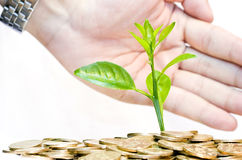Protecting an investment and money concept. Protecting a good investment and making money concept - businessman hands with plant sprouting from a pile of coins Stock Photos