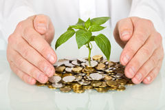 Protecting an investment and money concept Stock Image