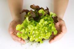 Protecting organic green salad Stock Image