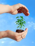 Protecting a plant. Protecting a new plant Stock Image