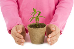 Protecting a plant. A young child protecting a plant Stock Photo