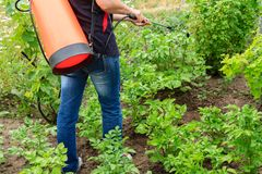 Protecting potatoes plants from fungal disease or vermin with pr. Female farmer is protecting potatoes plants from fungal disease or vermin with pressure sprayer Stock Images
