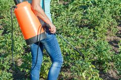 Protecting potatoes plants from fungal disease or vermin with pressure sprayer. Farmer is protecting potatoes plants from fungal disease or vermin with pressure royalty free stock image