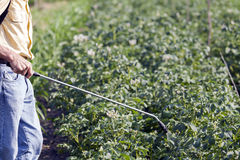Protecting potatoes spray hand spray stock image