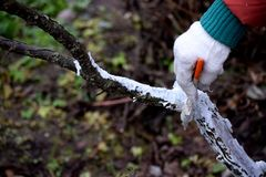Protecting trees from winter cold months. stock photo
