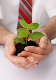 Protection. Close-up of a businessman's hands cup a green plant Royalty Free Stock Images