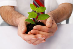 Protection. Close-up of a businessman's hands cup a green plant Royalty Free Stock Image