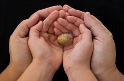 Protection. Adult's hand and child's hand protect a snail Royalty Free Stock Images