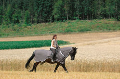 Protection against insects for horses. Horseback rides on the field. The horse is protected from insects with blanket-net Stock Photos