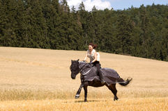 Protection against insects for horses. Stock Images