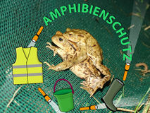 Protection of amphibians Royalty Free Stock Images