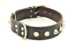 Protection collars dogs Royalty Free Stock Photo