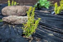 Protection de mauvaise herbe d'usines photo libre de droits