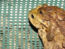 Protection des amphibies photos stock