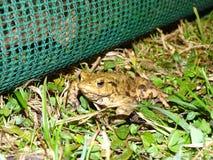 Protection des amphibies images libres de droits