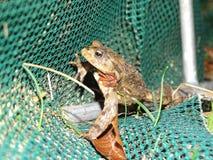 Protection des amphibies images stock