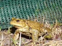 Protection des amphibies photo libre de droits