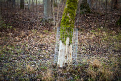 Protection grids against beaver damage Royalty Free Stock Photos