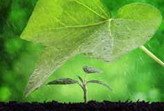 Protection. New life protection and nurture concept rain on a seedling royalty free stock image