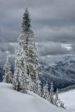 Cluster of Snow Covered Evergreens on Cloudy Day in Cascade Mountains Royalty Free Stock Photos