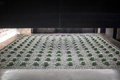 Protection pour le cactus croissant dans l'intérieur Image stock