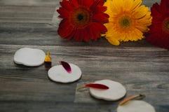 Protections de coton, bouteilles, pétales roses frais de fleur, fond en bois de préparation de table photographie stock