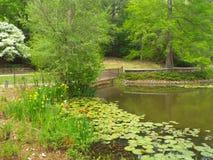 Protections de lis sur le lac Photos libres de droits