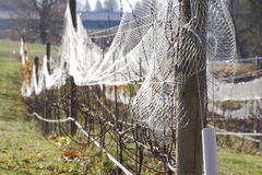 Protective Berry Netting Royalty Free Stock Images