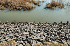 Protective breakwater. On the pond Stock Photography