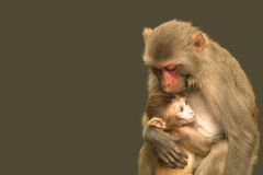 Protective caring mother wildlife Royalty Free Stock Photo