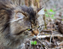 Protective color a cat on a natural background Royalty Free Stock Images