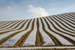 Protective covering over crops stock photos