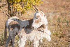 Protective mother donkey Royalty Free Stock Image