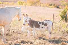 Protective mother donkey Royalty Free Stock Images