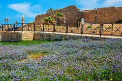 The protective walls and field of lavender flowers Stock Photo