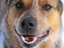 Protector de la situación del perro en nieve Imagenes de archivo