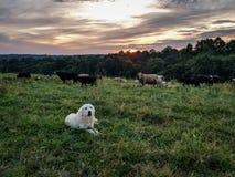 Protectores de la granja Fotografía de archivo libre de regalías