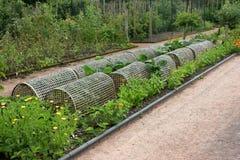 Protegendo os vegetais Fotos de Stock Royalty Free