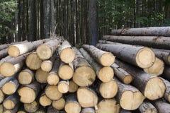 Protegga la foresta Fotografia Stock