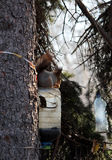 Protein is fed from a plastic feeding box. The squirrel feeds from the plastic feeder in the spring garden Stock Image