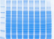 Protein gel. SDS-PAGE protein gel Stock Photo