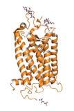 Proteina di Rhodopsin Fotografia Stock