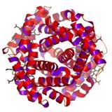 Proteina globulare Immagini Stock