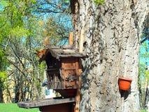proteina na drzewnym domu Obrazy Royalty Free
