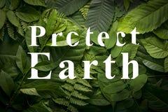 Proteja el concepto de la tierra de follaje verde salvaje de la selva Imagen de archivo libre de regalías