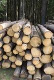 Proteja a floresta Fotografia de Stock Royalty Free
